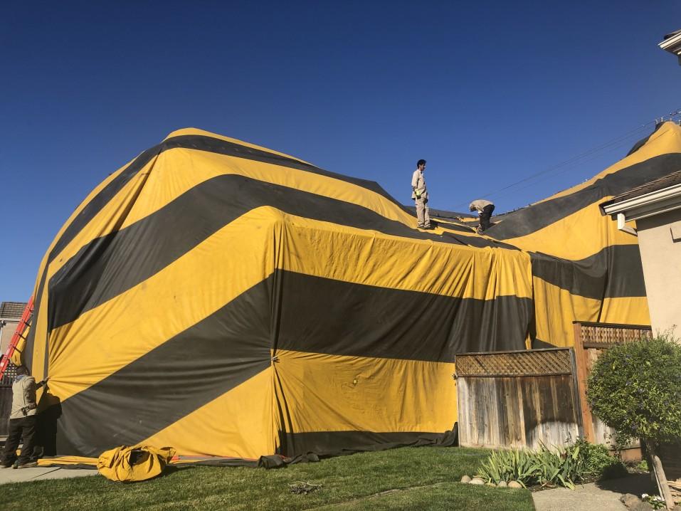 Roach extermination tent