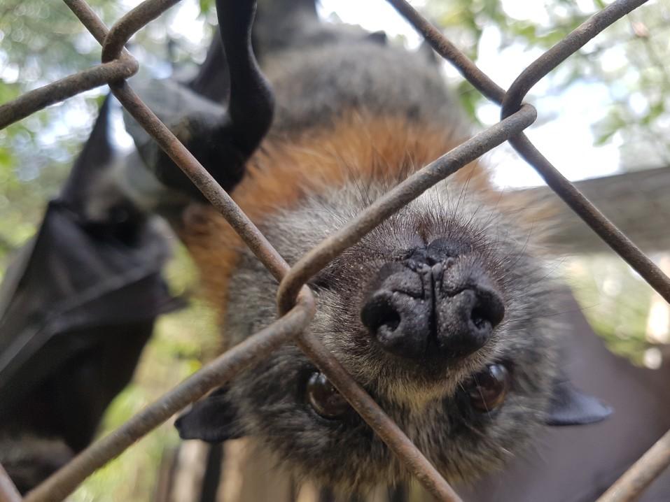 Dealing with bats in Alberta