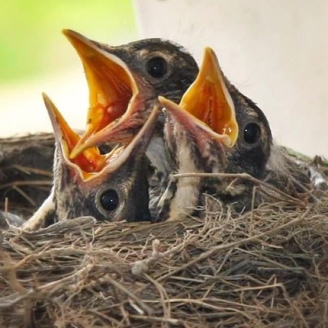 birds nest, bird control
