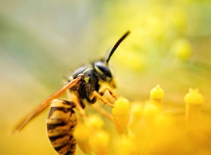 wasp-control-calgary