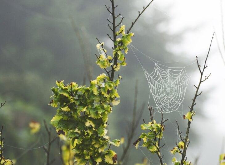 calgary spiders
